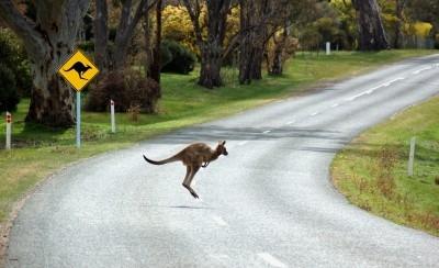 Moving to Australia: Where to Start?